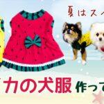 【スイカのワンピース】すいかの犬服を作ってみた【DIY】